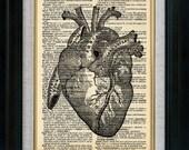 Heart Anatomy 03 Vintage Illustration on Book Page Art Print (id5518)