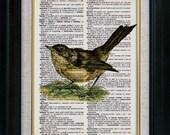 Sparrow Bird Vintage Illustration on Book Page Art Print (id5069)