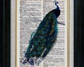 Beautiful Peacock II Vintage Illustration on Book Page Art Print (id5096)