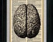 Anatomy Human Brain Top Vintage Illustration on Book Page Art Print (id7705)