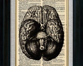 Anatomy Human Brain Bottom Vintage Illustration on Book Page Art Print (id7706)