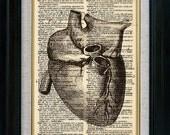 Anatomy Human Heart Vintage Illustration on Book Page Art Print (id7716)