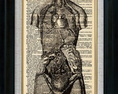 Anatomy Human Body Whole Vintage Illustration on Book Page Art Print (id7720)
