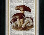 Mushroom 05 Vintage Illustration on Book Page Art Print (cpp005)