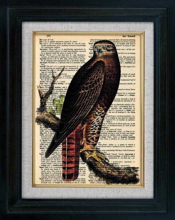 Eagle 01 Vintage Illustration on Book Page Art Print (id5055)
