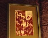 Framed Art / Wildflower / Vintage Photo / Nature