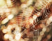 "SpiderWeb Photo Print, Spider, Fall, Leaves, Bokeh,  8x10"" Fine Art Photograph ""Fall Spider Web"""