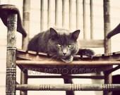 Cat Photo Print, Gray, Yellow Cat's Eyes, Rocking Chair, Staring,