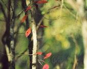 Red Leaves Photo Print, Nature Photography, Fine Art, Leaf, Tree, Woods, Fall, Autumn