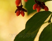 """Nature Photography Print - Red Berries - Fine Art Photograph - Botanical  Print - Wall Art - """"Red Berries"""""""