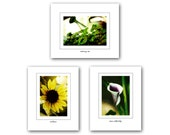 """Summer Garden Prints, Set of Three 4x6"""" Prints, Watering Can, Samur Calla Lily, Sunflower, Flowers, Nature Photography"""