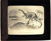 RESERVED  Lantern slide. Drawing of Gigantic Dinosaur. ca. 1910.