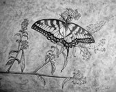 Swallowtail (Original Signed Graphite Drawing)