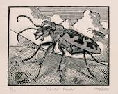 Cicindela formosa - Woodcut - Thomas Shahan
