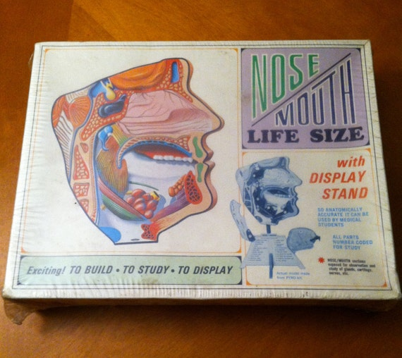 Vintage Medical Nose and Mouth Display