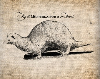 Antique Ferret Animal Weasel llustration Digital Download for Papercrafts, Transfer, Pillows, etc. Burlap No 1455
