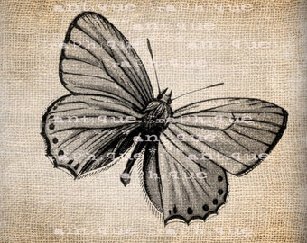 Antique European Butterfly 2 Illustration  Digital Download for Papercrafts, Transfer, Pillows, etc No 1529