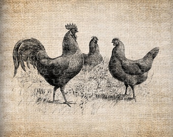 Antique Chicken Hens Rooster Farm llustration Digital Download for Papercrafts, Transfer, Pillows, etc. Burlap No 3685