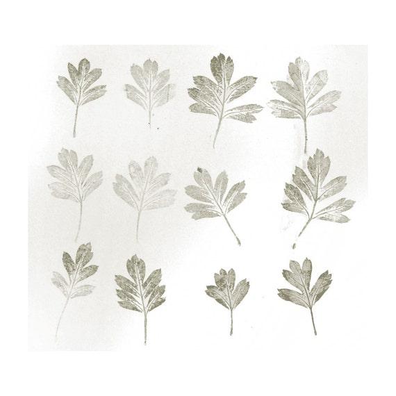 12 hawthorn leaves - monoprint