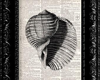 Sea Shell Art Print  - Vintage Dictionary Print Vintage Book Print Page Art Upcycled Vintage Book Art