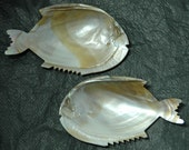 Pair Mother of Pearl Sea Shell Nappies