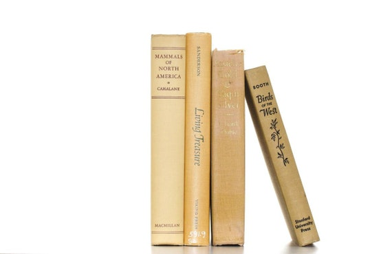 Faded  Butter Yellow Gold Shabby Chic 4 Vintage Book Collection Interior Design
