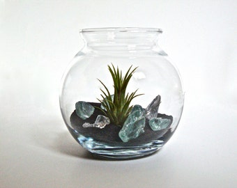 SALE Air Plant's Little Black Sand Beach with Sea Glass