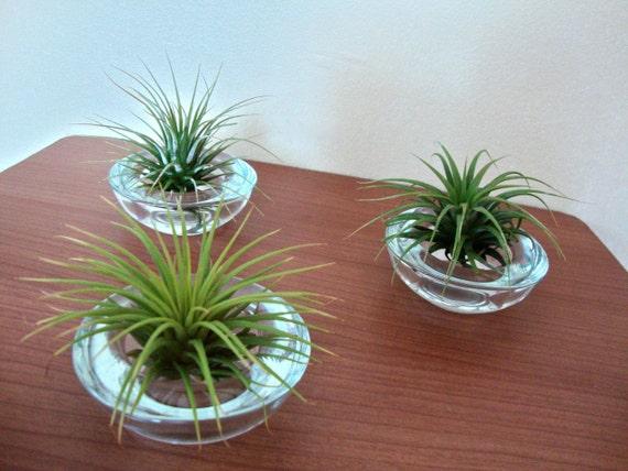 Three Mini Air Plant Terrariums