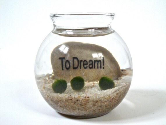 Marimo Moss Ball Underwater Zen Terrarium with Inspirational Word Stone, Housewarming Gift, Inspiration Gift, Inspiration Decor, Stone Decor