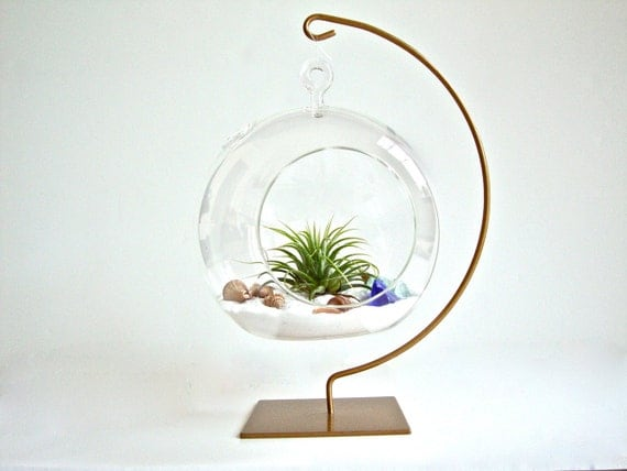 hanging glass globe air plant terrarium with gold painted. Black Bedroom Furniture Sets. Home Design Ideas