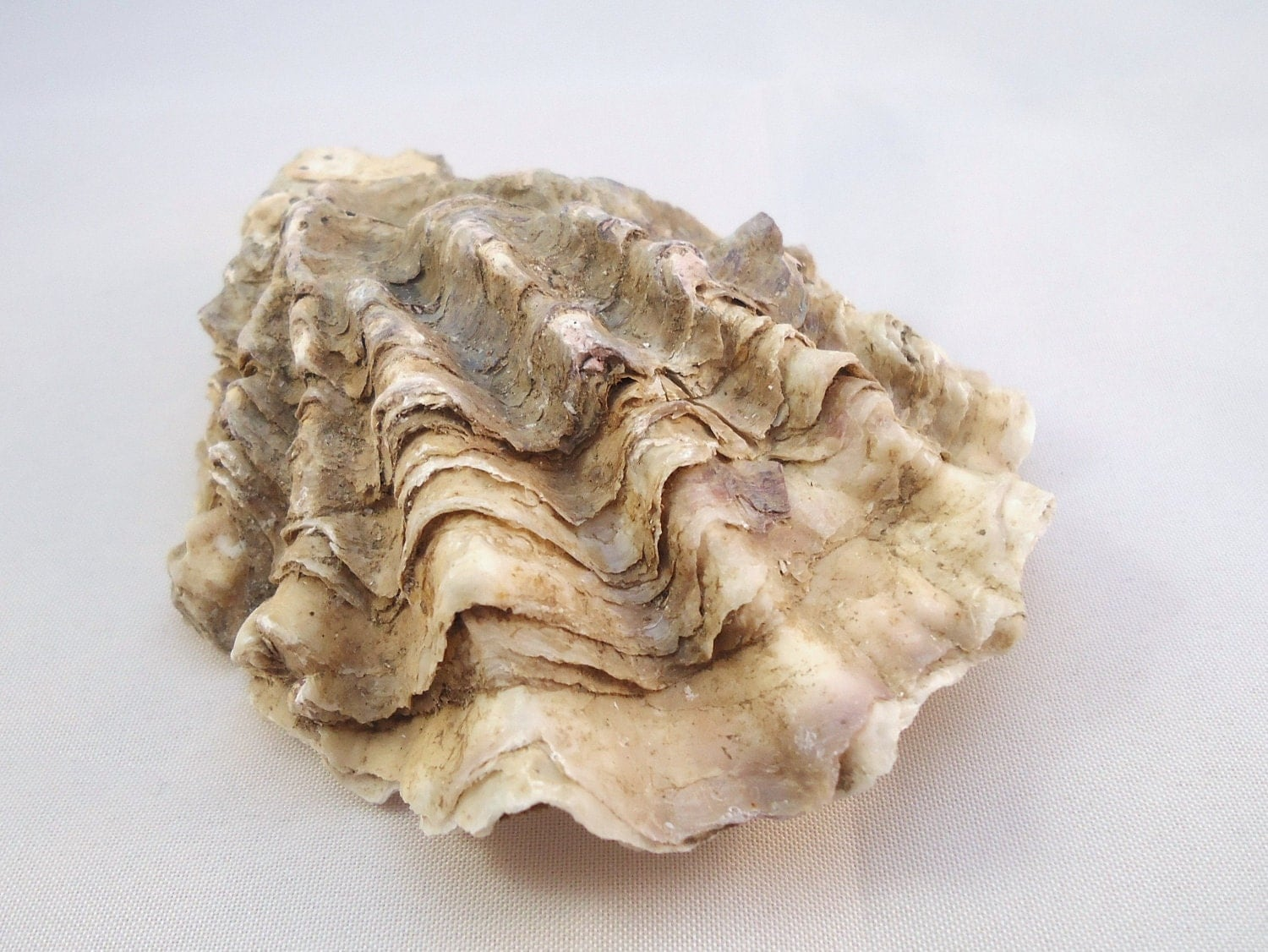 Natural oyster shell large rustic shell by beakez on etsy for What are shells made of