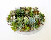 reserved: Succulent wreath or centerpiece - Fresh & growing plants for your table or wall.