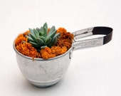 A gift for your favorite chef: a vintage flour sifter filled to the brim with reindeer moss & a blue succulent