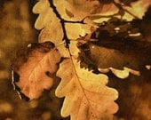 English Autumn Leaves - warm autumnal browns