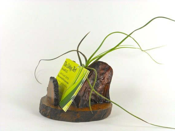 Business Cardholder Manzanita & Oak with Air Plant Desk Accessory Executive Bosses Coworker gifts under 30