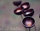 nature photography, metal flowers, copper bowl, rain, fine art, 4x6, print, wilt or rust