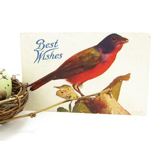 Blackbird Postcard 1909 Best Wishes Red Breasted Blackbird Antique Card