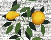 Lemon Tree SQUARE Dictionary Art Print, Original Design, FREE SHIPPING