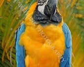 2012 - LCS -BLUE & YELLOW Macaw No. 2 - Fine Art Photograph