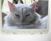 Cat Photo Greeting Card All Occasion Blank Inside