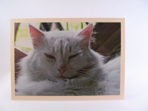 Cat Photo All Occasion Card Blank Inside