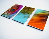 Magnets - set of 3 - pink, turquoise, orange, lime - Peacock Feathers and Swirls