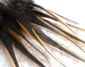 Craft Feathers, Black and Brown Furnace Rooster Feathers