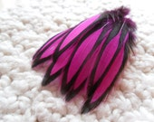 Bright Magenta and Black Neon Feathers, Craft Feathers