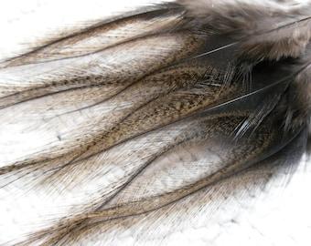 Coq de Leon Rooster Feathers, Light Pardo, Natural Unique Craft Feathers Qty12