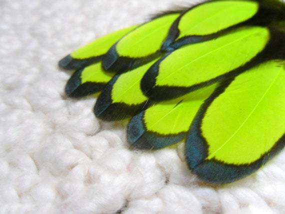 Fluorescent Yellow Neon Feathers, Black Laced Hen Craft Feathers