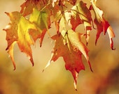 Autumn Leaves 11x14 Fine Art Photography Home Decor Wall Art - all images available - laughlovephoto