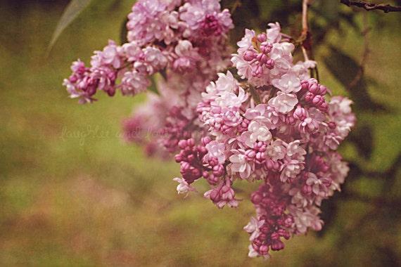 Lilacs Fine Art Photography Shabby Chic Feminine Purple Orchid Lilac Green Wine Flower Floral Spring Bedroom Home Decor Wall Art
