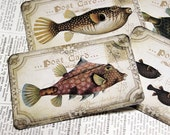 Silly Fish Art Cards - Set of 6 - Make Your Own Hang Tags