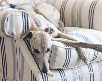 RELAXATION - Cleo the Whippet - Dog Photo Print